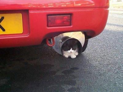 exhaust-ed-cat.jpg
