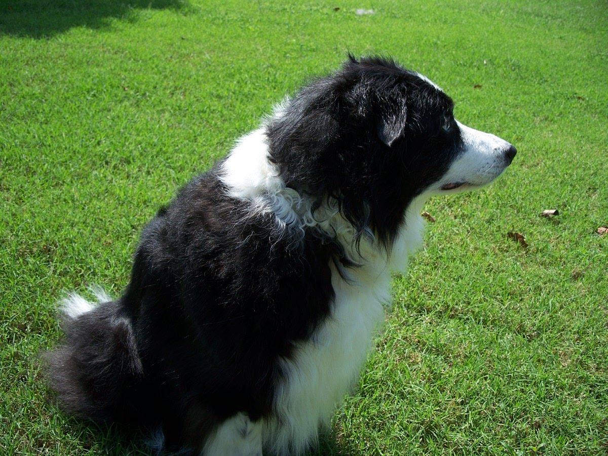 Black Fluffy Dogs | www.imgkid.com - The Image Kid Has It!