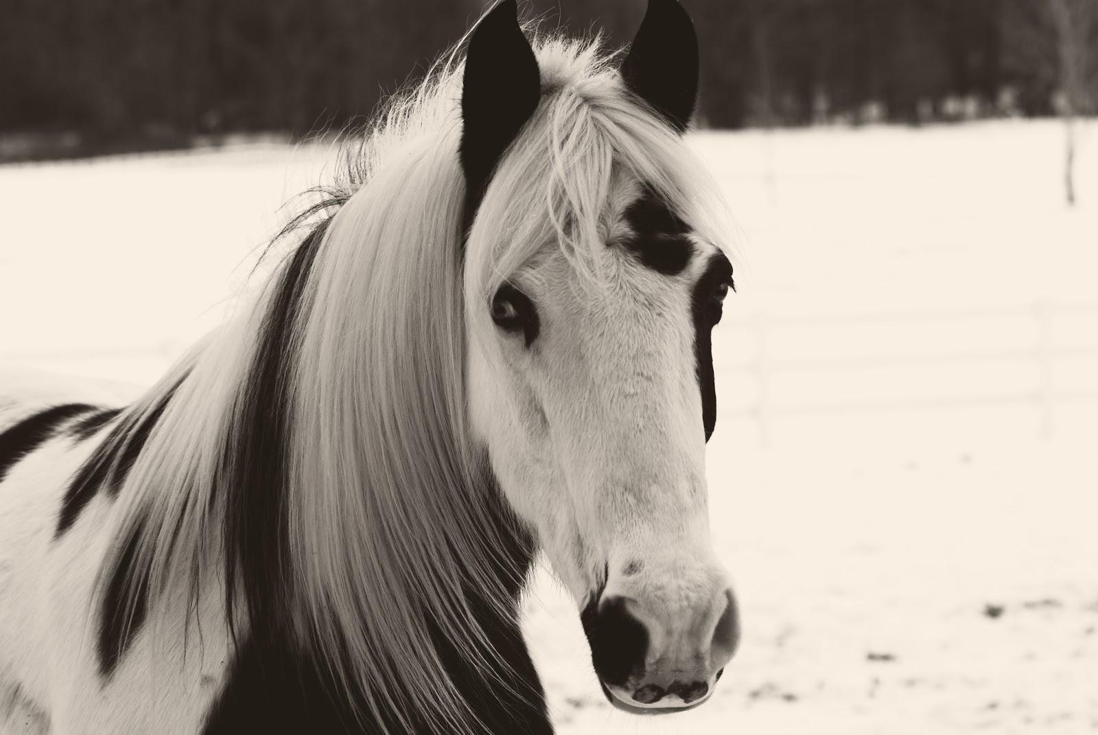 My Corner of the World: Black and White Pony