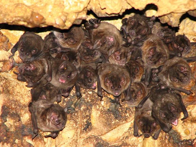 Nuestros amigos murcielagos en las cavernas