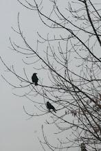 par ma fenêtre