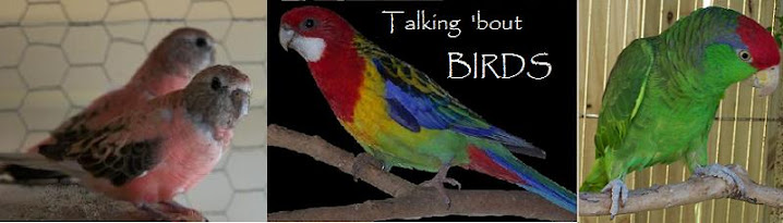 Talking 'Bout Birds