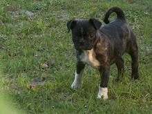 Meet Annie..