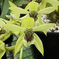 05 01 2010 06 01 2010 Orchid Flower Species