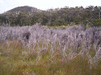 Burnt vegetation, Blowhole Valley, Tasmania - 2006