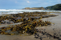Kelp and Lion Rock, South Cape Bay - 6th April 2010