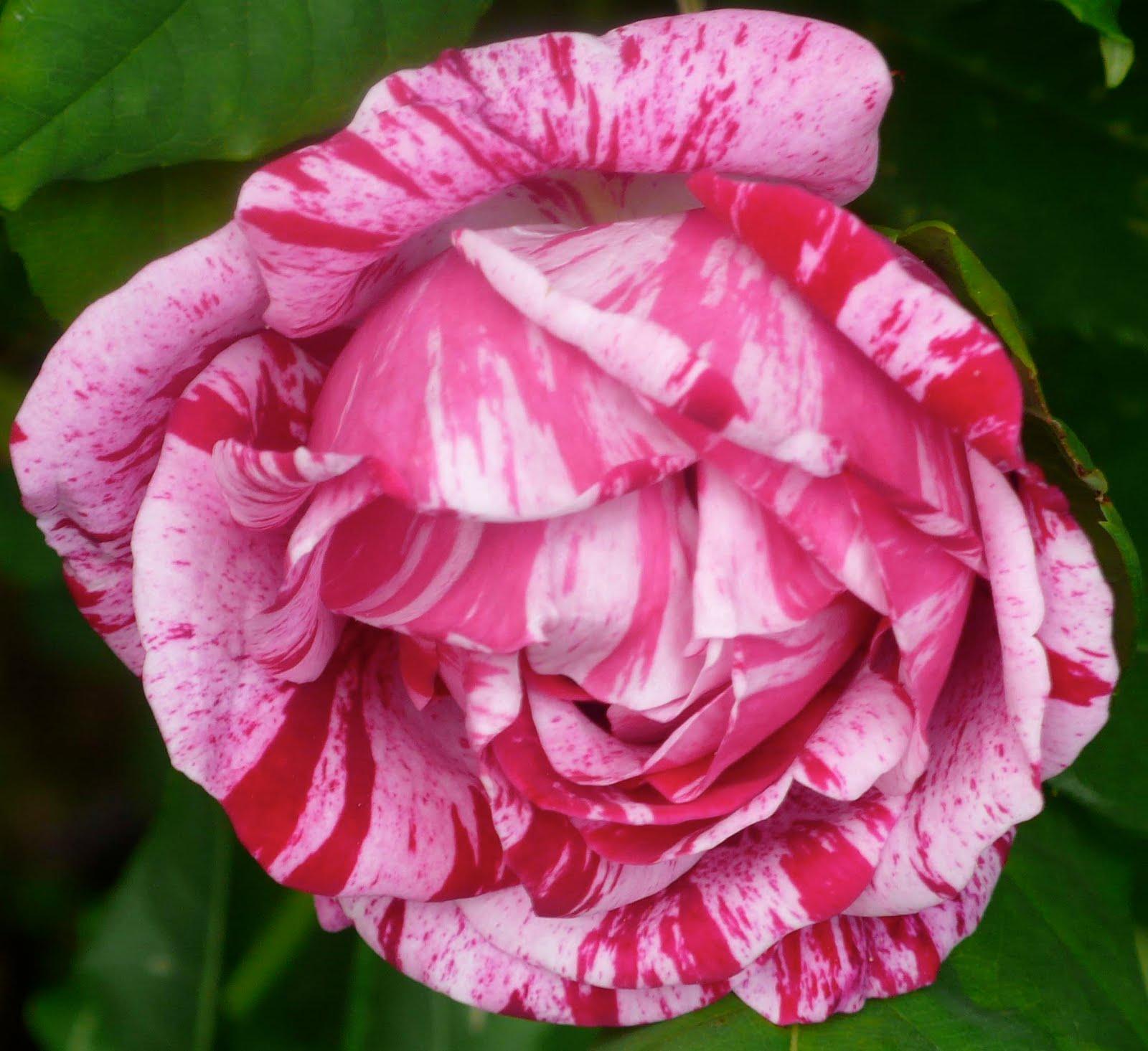 Share my Garden: July 2010