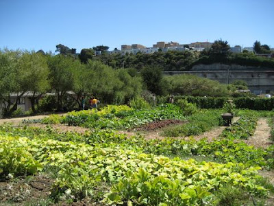 photo of Alemany Farm in San Francisco
