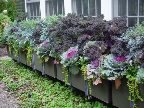 I Loved That Design Above Almost Can T Describe My Love For This Planting Full Of Ornamental Kale And Cabbage Bricas Want Window Box