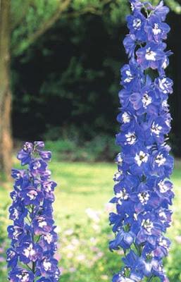 flowers aroma