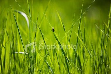 [blade+of+grass.jpg]