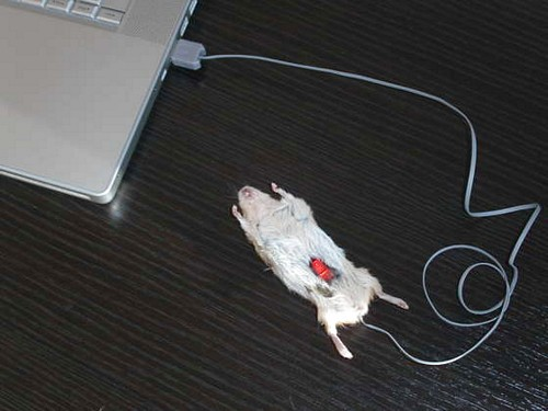 [computer_mouse_using_a_real_dead_mouse_3.jpg]