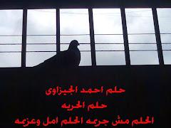 حلم علشانك يا مصر