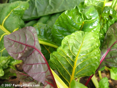 In My Kitchen Garden How To Grow Your Own Swiss Chard From Seed – What Should I Plant in My Garden