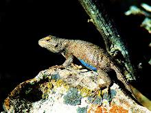 Maze Lizard '08