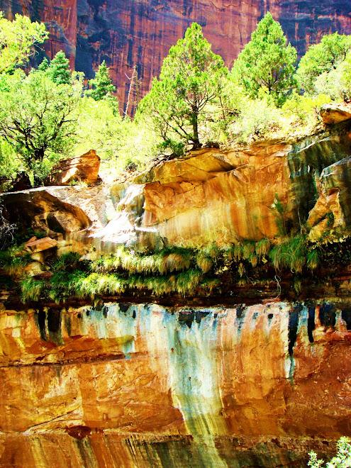 Zion National Park '08