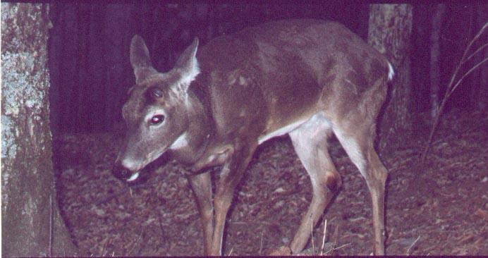 [bambi.jpg]
