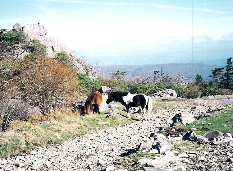 [ponies.jpg]