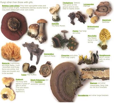 Highland holiday cottages nr aviemore wild mushroom id
