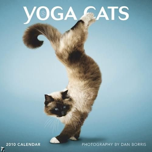 Cat Pose Yoga