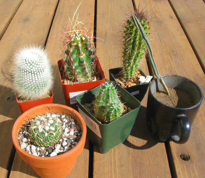 Houseplant Care Guides: Cacti And Succulent Care
