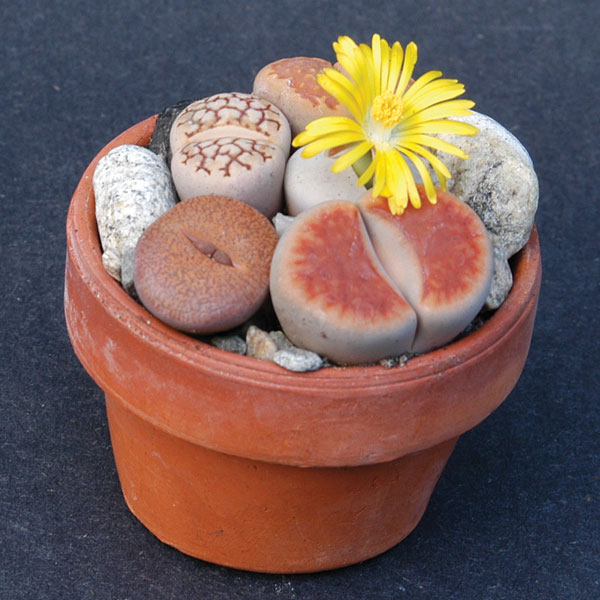 how to make a plastic pot look like stone