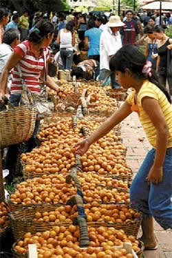 El achachairú de Porongo se abre a mercados del interior   AGRONOMIA