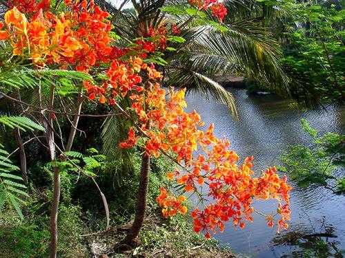 Naturelover India Nature