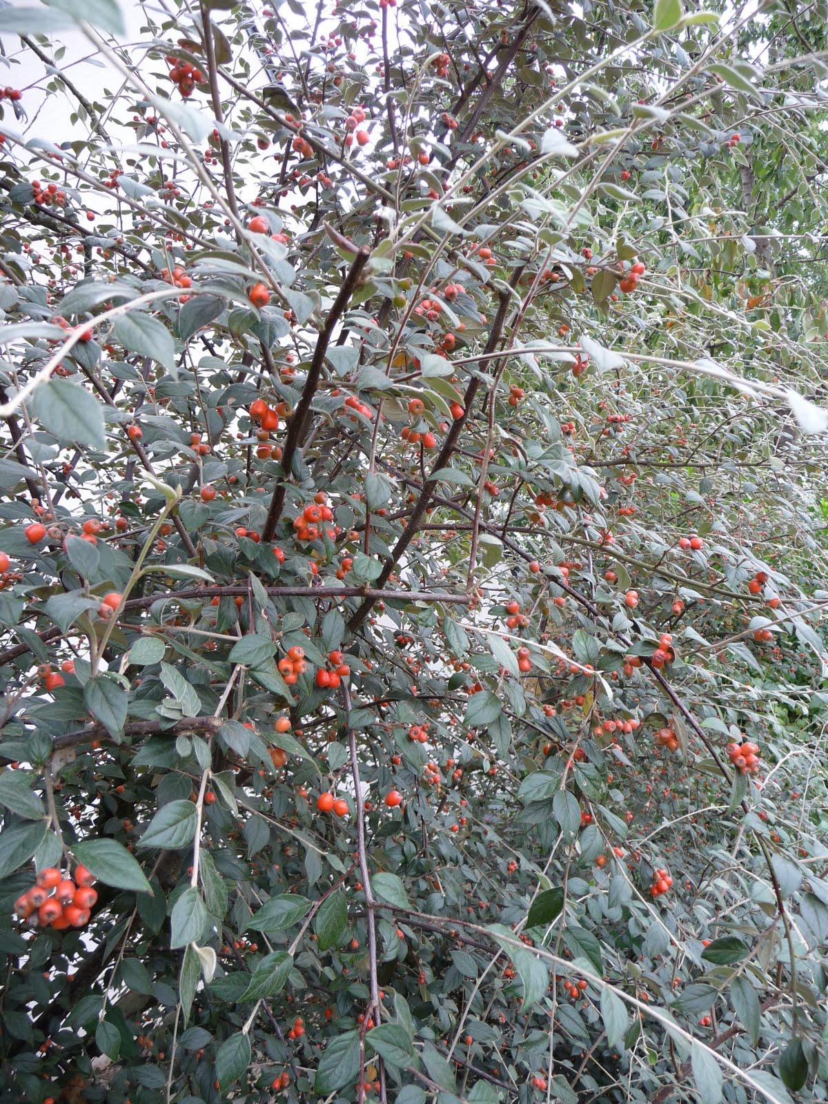 Ma Terre de Bruyère Petits fruits dautomne