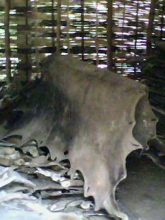 foto ini adalah kulit yg ada di gudang.... ini adalah kulit kerbau..  bermacam2 kulit kerbau.. seperti kulit kerbau halus dll. 439f62922d