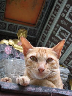 Luang Prabang Temple Cat
