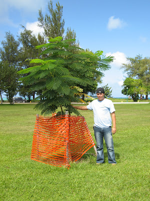 American Memorial Park Flame Tree