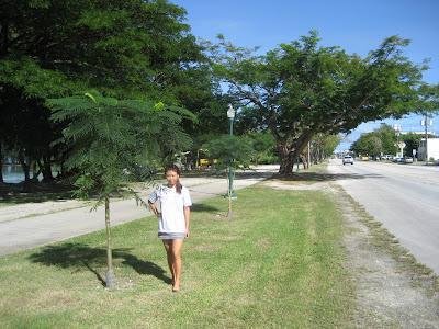 Flame Tree Beach Road Saipan