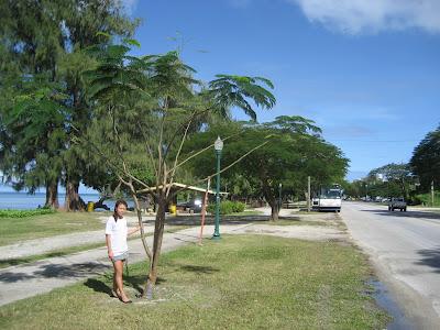 Saipan Beach Road Flame Tree