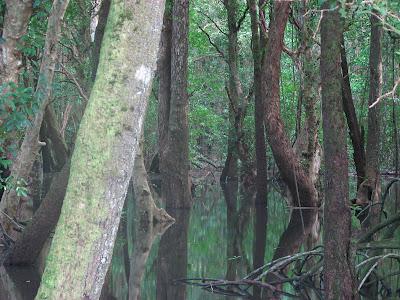 Pohnpei Mangrove