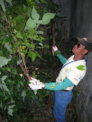 Jun Flores