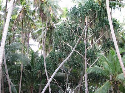 Eneko Forest
