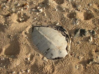 Eneko Turtle Shell
