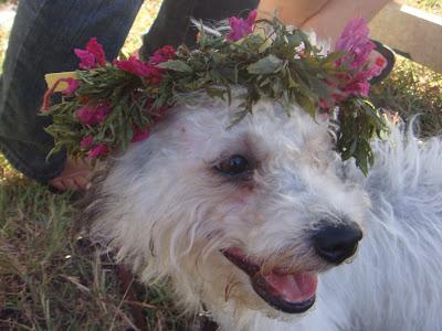 Saipan Boonie Dogs