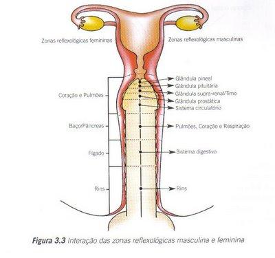 Penis Reflexology 23