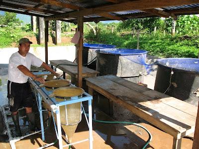 Cipehi piscicultura andina amaz nica for Cria de tilapia en estanques plasticos