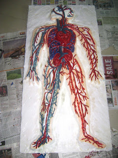 on my board right now circulatory system model