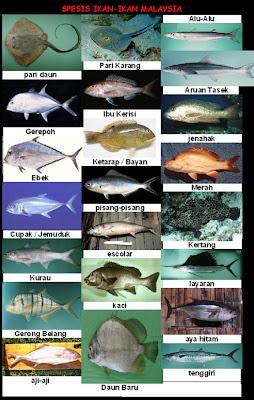 Jenis Ikan Laut Di Sabah Aneka Ikan Hias