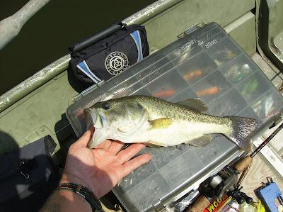 Fish missouri busch wildlife area st charles county mo for Busch wildlife fishing