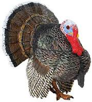 turkey toy bird miniature