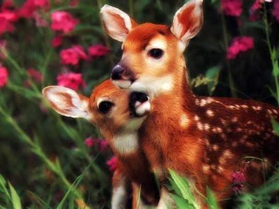 Sanal Tasarımcı En Sevimli Hayvan Bebekleri Resimleri En Sevimli