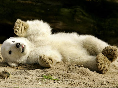 Knut cute polar bear 6