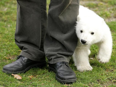 Knut cute polar bear 4