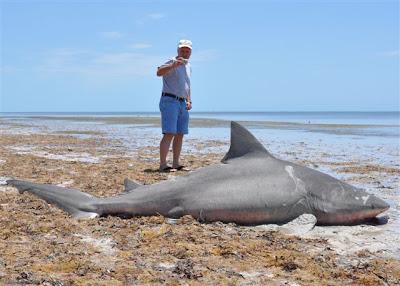 The Shark Diving International Team Blog Land Based Shark