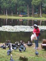 Euzinha cercada por patos
